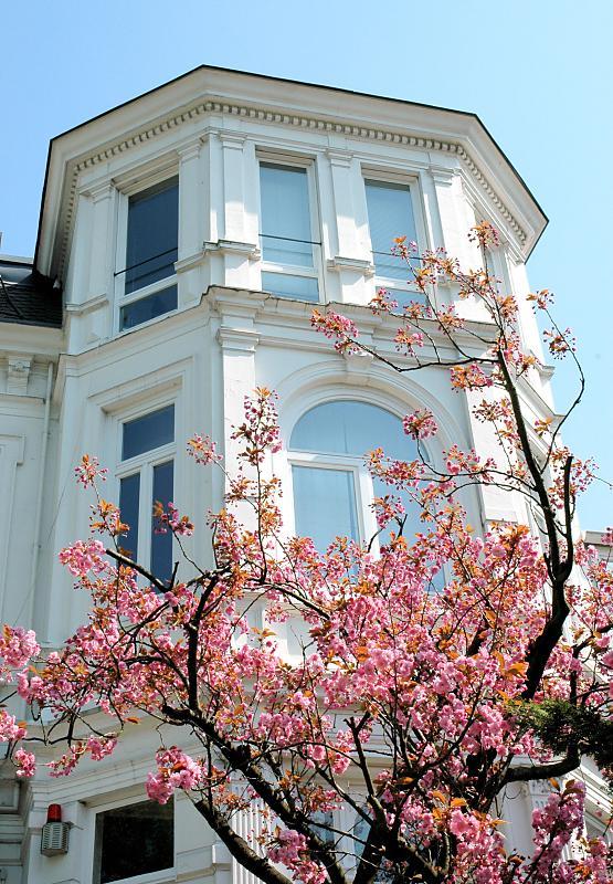 2400 8186 historische weisse villa japanische zierkirsche im vorgarten suche nach vorgarten. Black Bedroom Furniture Sets. Home Design Ideas