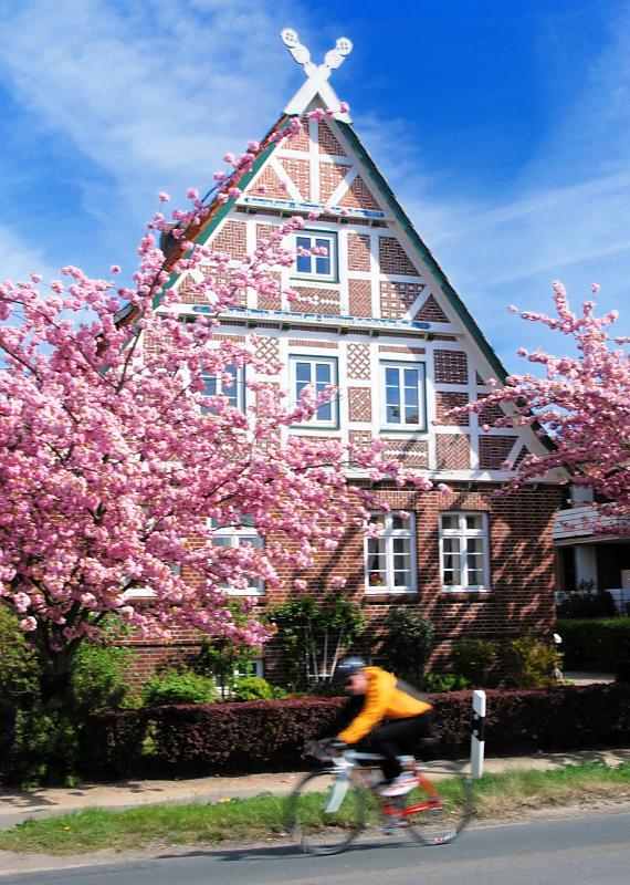 2680_2182 fachwerkgebäude an der strasse - rosa blühende, Garten Ideen