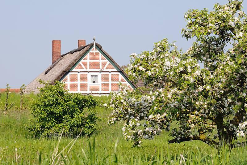 9400 7472 ein bl hender kirschbaum im alten land stadtteil hamburg cranz bezirk hamburg. Black Bedroom Furniture Sets. Home Design Ideas