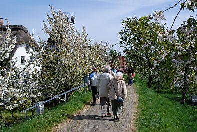 Fotos Spaziergang im Alten Land/ Fussgaenger auf der