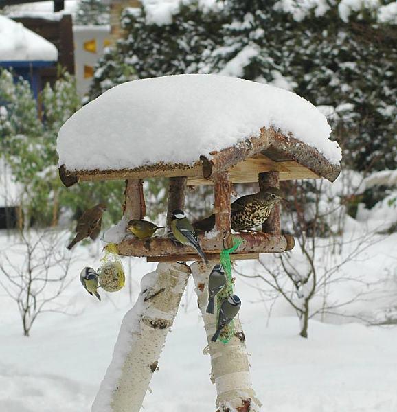 wintermotive aus hamburg winterf tterung von wildv geln im schnee. Black Bedroom Furniture Sets. Home Design Ideas