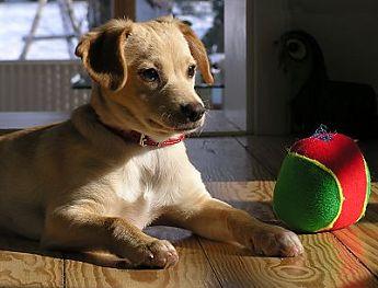 hund modeller www cassiopeiastars com